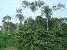 Als Ausgleich für unsere CO²Emissionen durch Autofahrten unterstützen wir ein Regenwaldschutzprojekt durch Landkauf im Amazonasgebiet von Peru